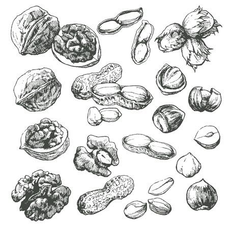 Dibujos Frutos Secos Otono Imagui