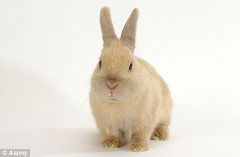 A terrible death: The pet rabbit awoke the homeowner by scratching on her chest