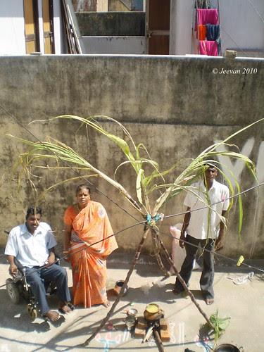 Pongal 2010