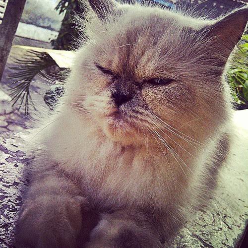 Lazy Olive #picoftheday  #pet  #instagram  #instamood  #instapic  @mayashabirina1 by be.samyono