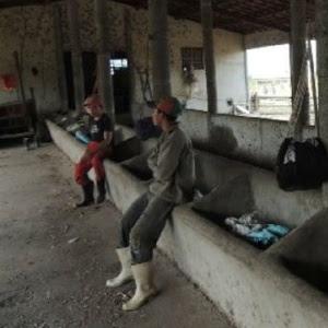 Trabalhadores libertados em curral que servia de dormitório em fazenda no interior do Ceará