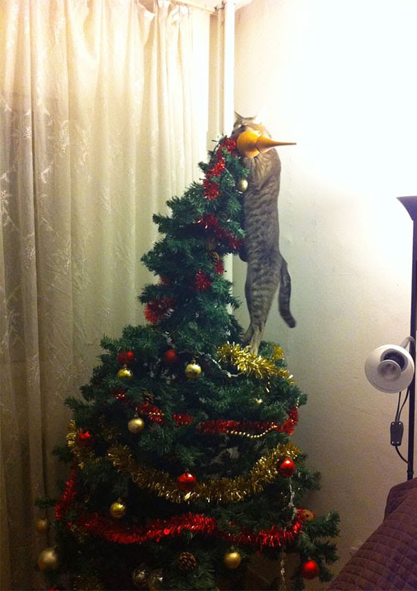 So This Cat Helped With The Christmas Decorations...