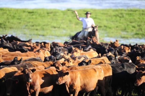 Com redução na oferta, projeção é de alta de 10% nos preços dos animais Ricardo Duarte/Agencia RBS
