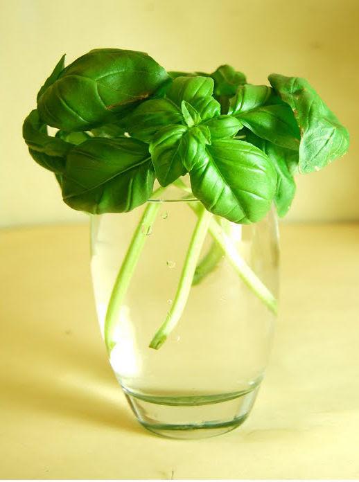 hierbas medicinales albahaca