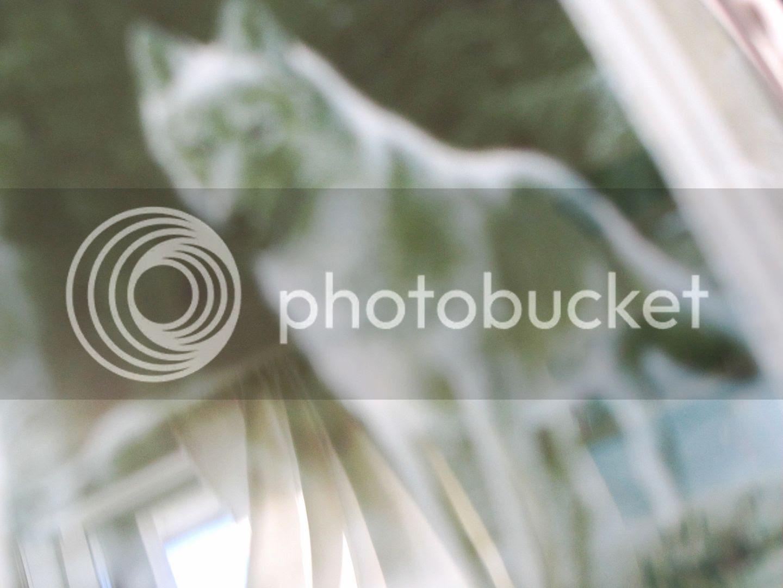 photo a0ceb6dc-c143-4eec-bcbc-90829e5c7154.jpg