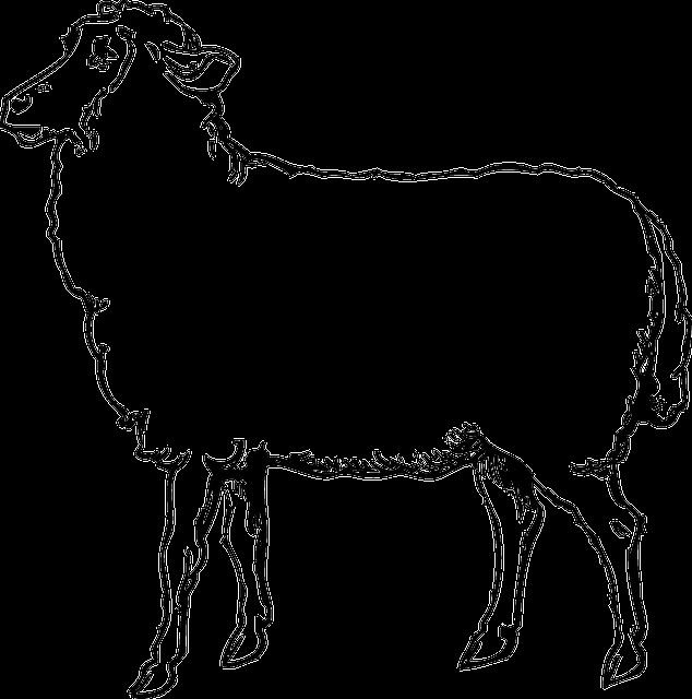 100 Gambar Sketsa Hewan Domba HD Terbaik