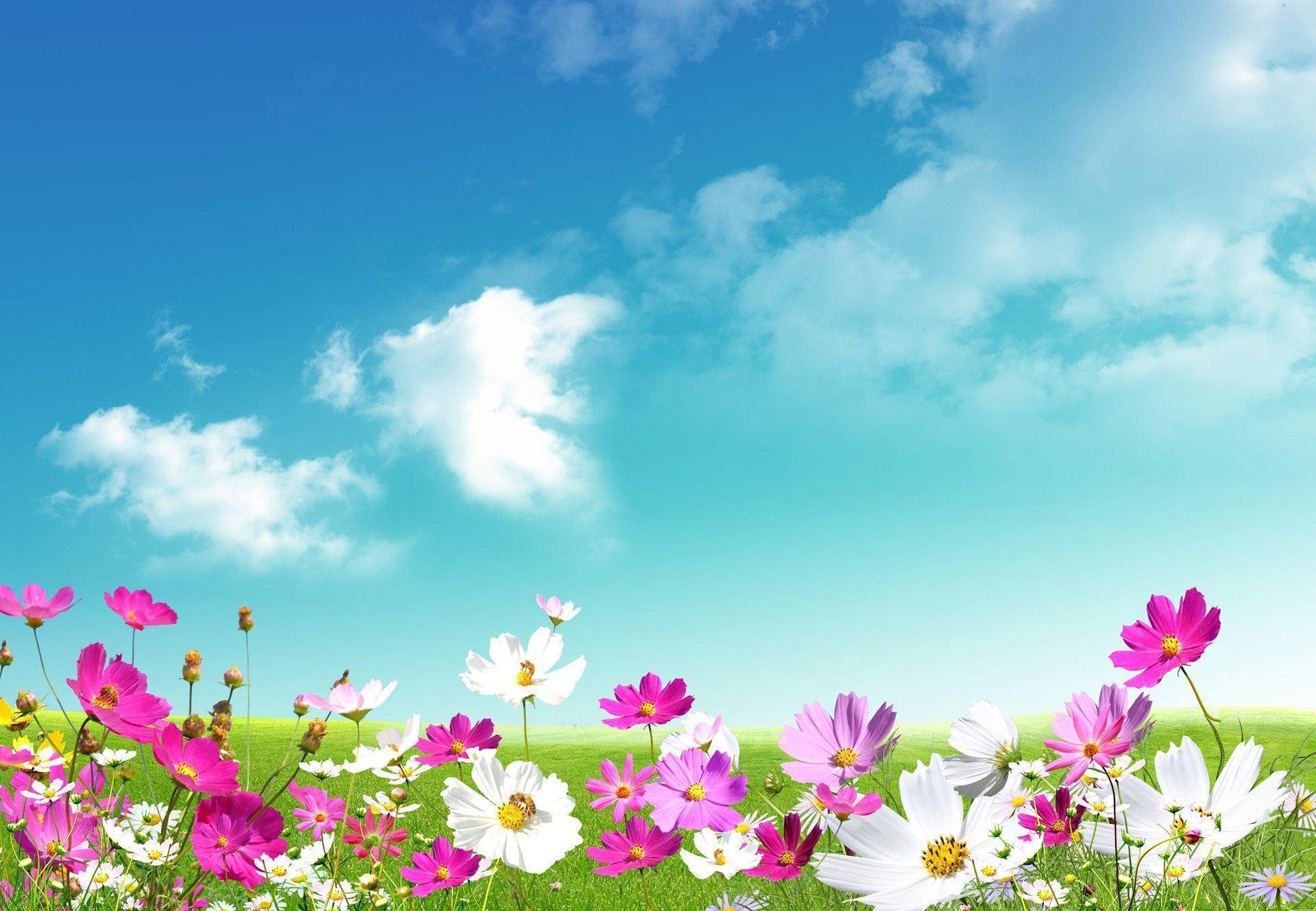 Free Spring Desktop Wallpaper Backgrounds  Wallpaper Cave