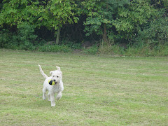 Playing with my ball in the field