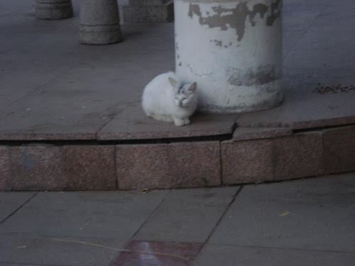 Cats in Shenyang, China _ 0147