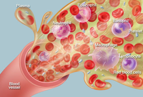 Anatomy And Physiology Of Blood Caring Is The Essence Of