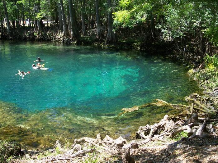 8. Manatee Springs
