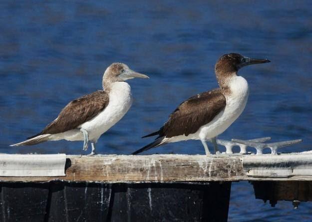 Wow! inilah Wujud Burung yang bisa Romantis Kepada Pasangannya seperti Manusia! Gak Percaya?