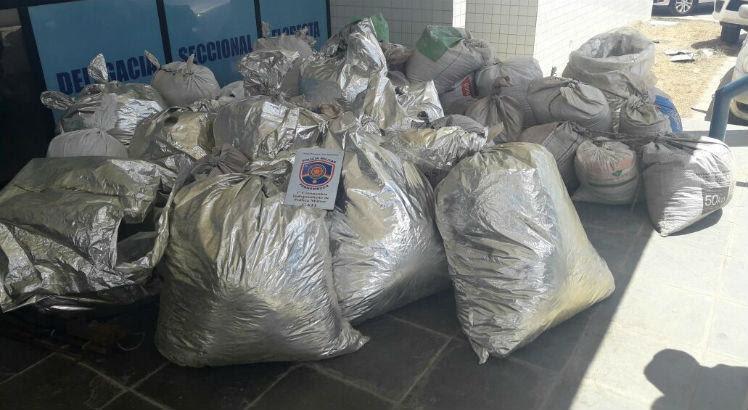 Em um sítio, foram apreendidos 497 kg de maconha, numa área conhecida como Poço da Panela 2, no município de Floresta / Foto: Divulgação
