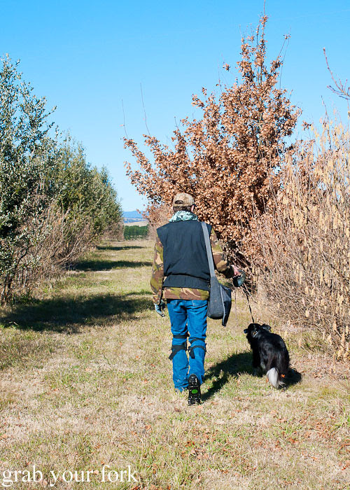 truffle hunt with dog sniffer