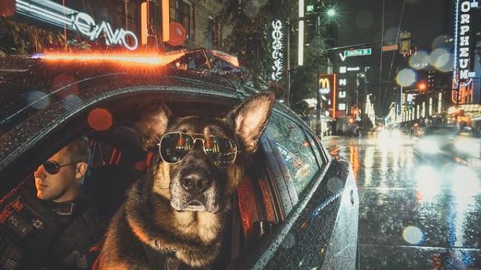 Así es el calendario benéfico de los perros policía de Vancouver