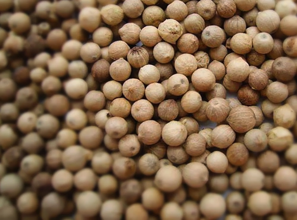 Everything You Wanted To Know About White Pepper