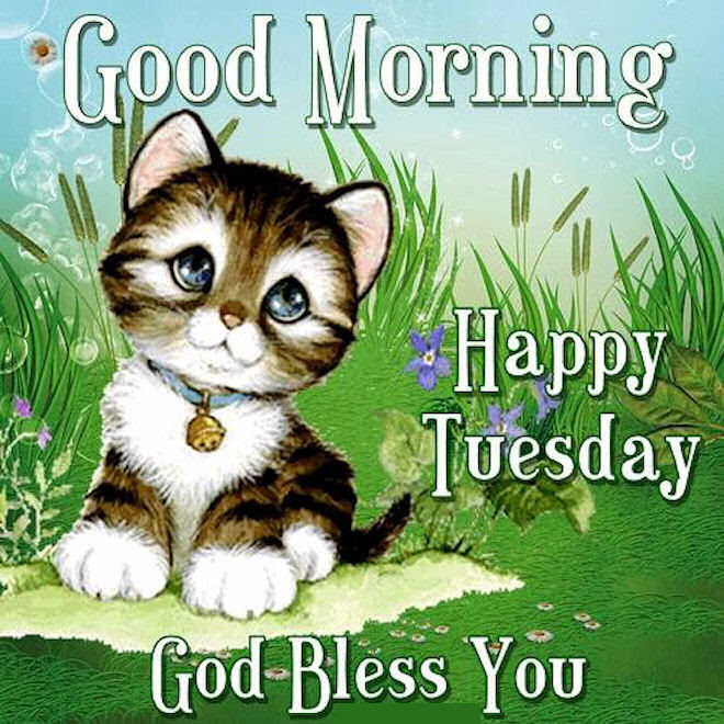 Good Morning Happy Tuesday God Bless You Cute Quotes Pictures