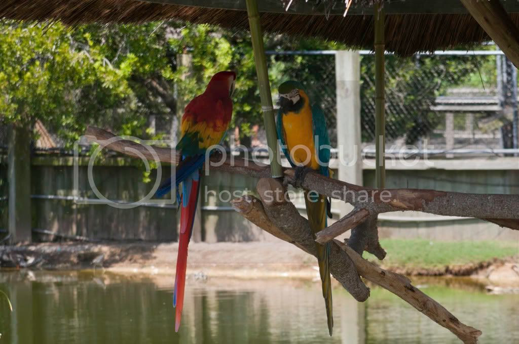 colorful parrots photo: Free to Download DSC_0178.jpg