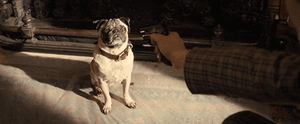 Para completar sua iniciação com Kingsman, ele é convidado para filmar o cão ele foi convidado para cuidar desde que era um filhote de cachorro.