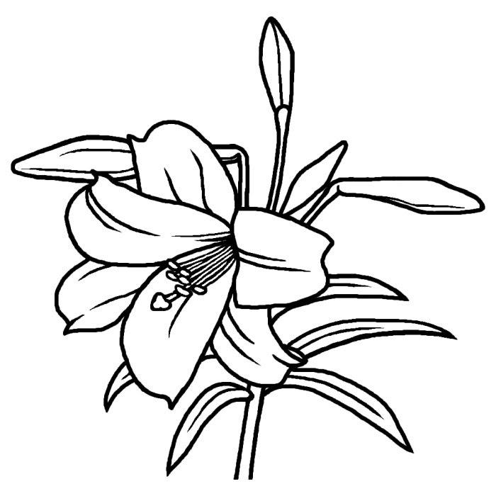 テッポウユリ鉄砲百合白黒夏の花無料イラスト素材