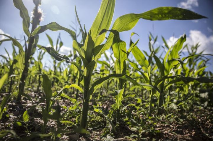 Nigeria Plans $1 Billion Crop Processing Zone To Boost Exports