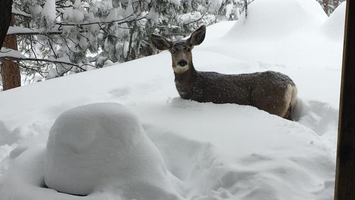 Deep freeze and snow can challenge survival for wildlife