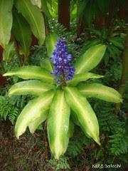 blueginger (1)