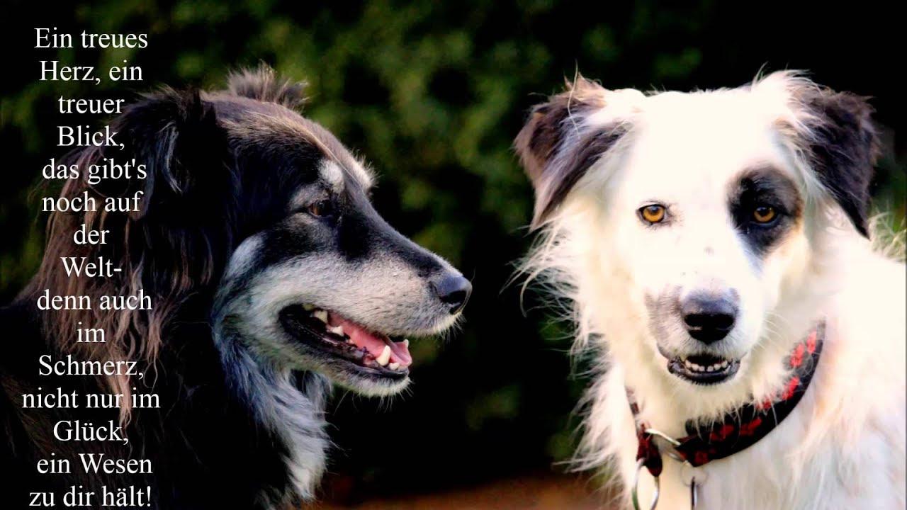 Schöne Zitate Hunde