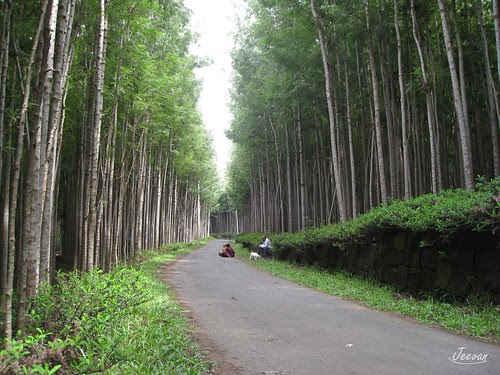 calm green lane