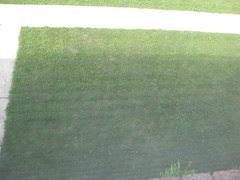 Dandelions in lawn #1