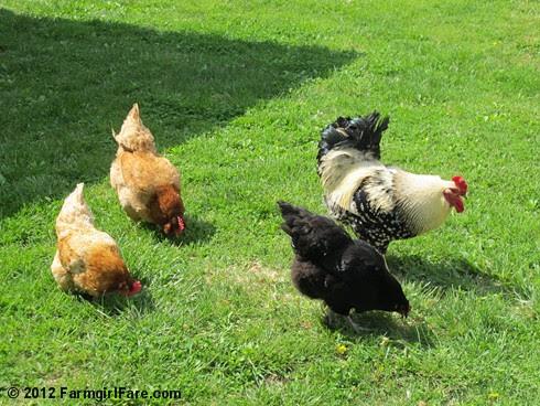 Easter egg hunt 2 - FarmgirlFare.com