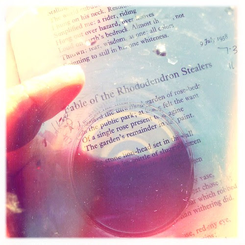 Drinking with Plath during the magic hour