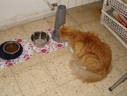 Simba drinks from the drip fountain