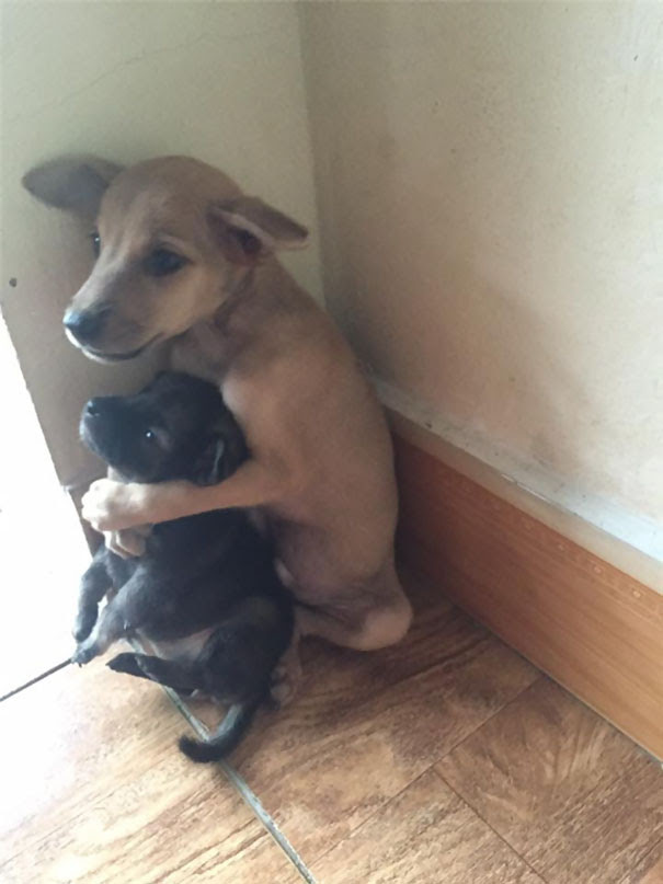 cachorrinhos-abandonados-na-param-de-se-abracar-desde-que-foram-resgatados-4