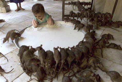 Schräge Pics, Ratten und Kind an rießiger Milchschale