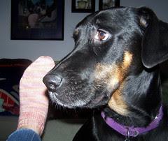 Lola_socks