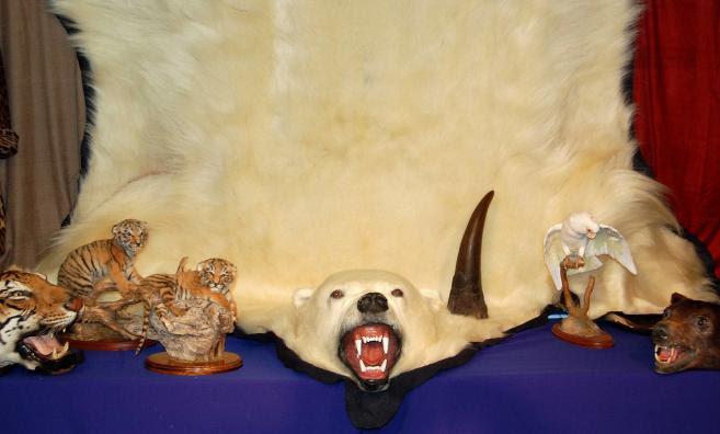 Photographie d'une saisie d'une peau d'ours par la police britannique, rendue publique le 7 mars 2013 par le Fonds international pour la protection des animaux (IFAW).