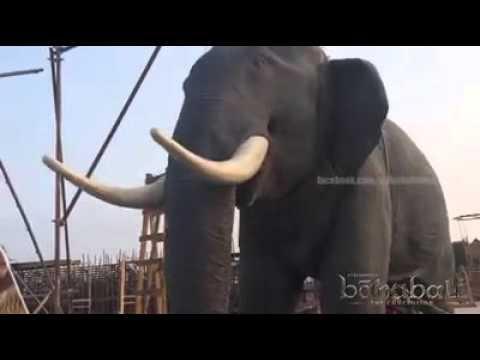 The Shocking Secrets Behind Bahubali's Elephant !!!