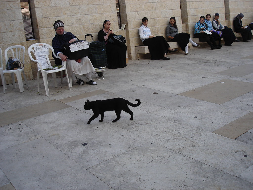 Kitty at the Kotel