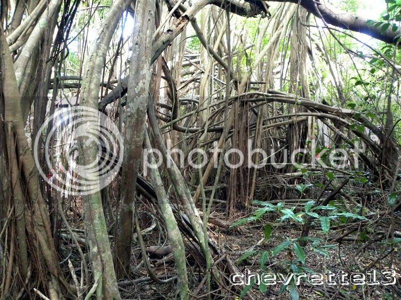 http://i1252.photobucket.com/albums/hh578/chevrette13/Madagascar/DSCN2961Copier_zps4cbcfcc1.jpg