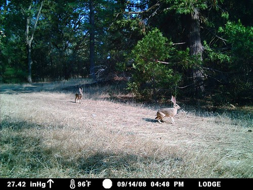 pair of jackrabbits on a hot day