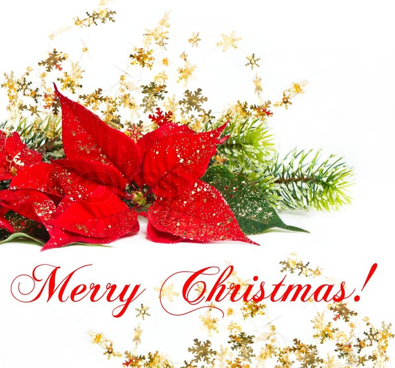 Merry Christmas Flowers Quote Clip Art Library