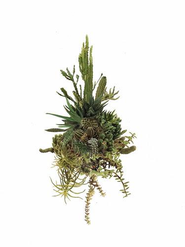 cactuscluster003