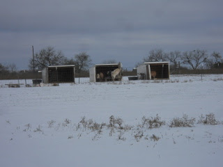 Sleet - View of Goat Sheds