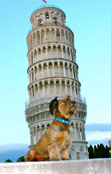 The Amazing Dog Traveler
