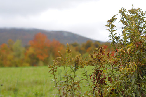 Vermont Fall Classic Populaire