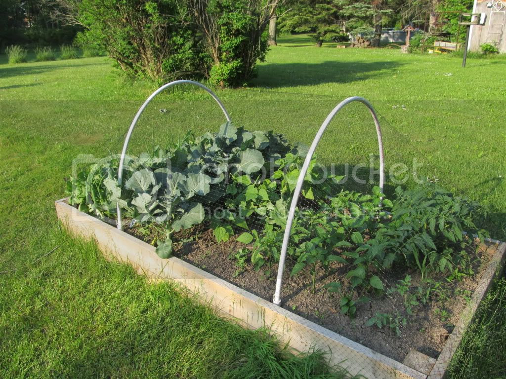 Our main garden last year, half way through growing season