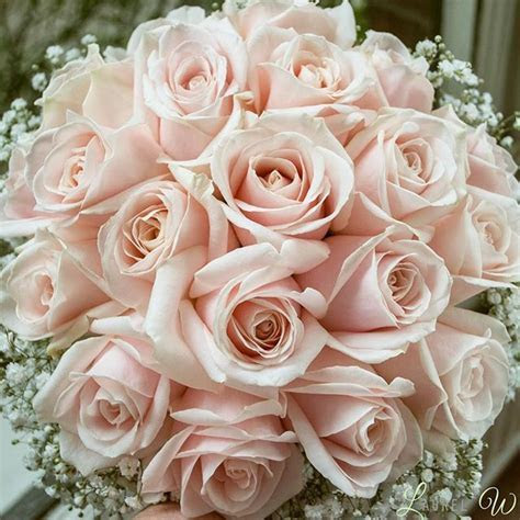 25  best ideas about Blush Roses on Pinterest   Green big