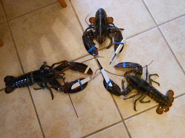 lobsters with knives