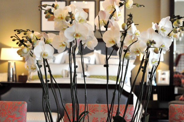 Decorating with Orchids — Irwin Weiner Interiors